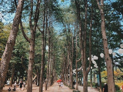Imagine de stoc gratuită din anotimp, arbori, baloane, cădere