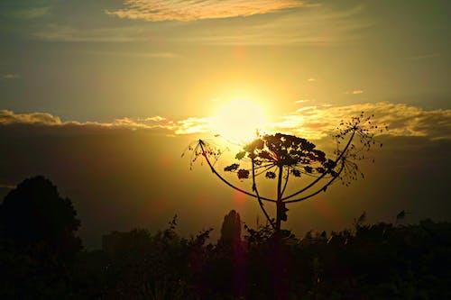 Foto profissional grátis de alvorecer, brilho do sol, hogweed, iluminado por trás