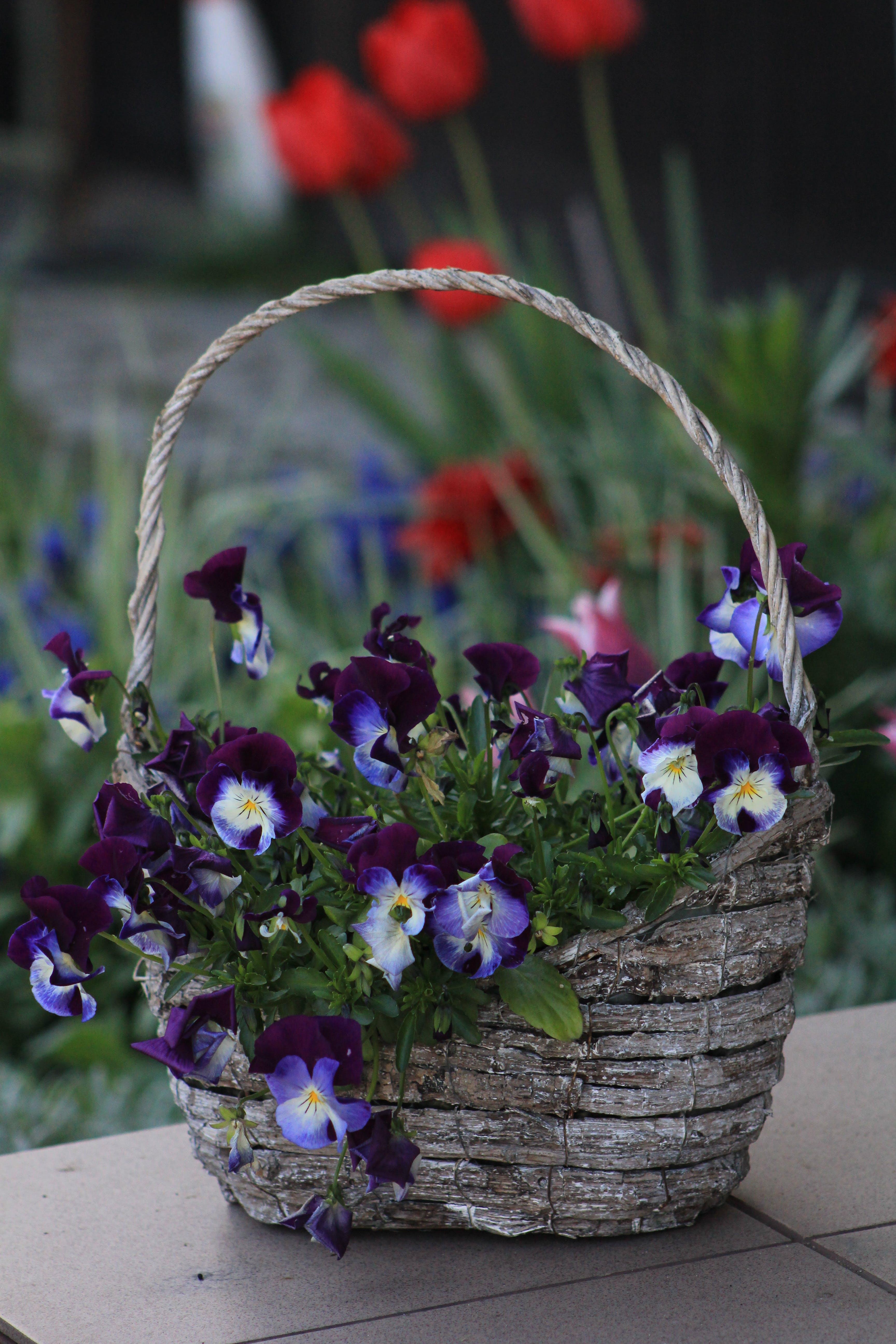 Photo of Violet Flowers On Basket
