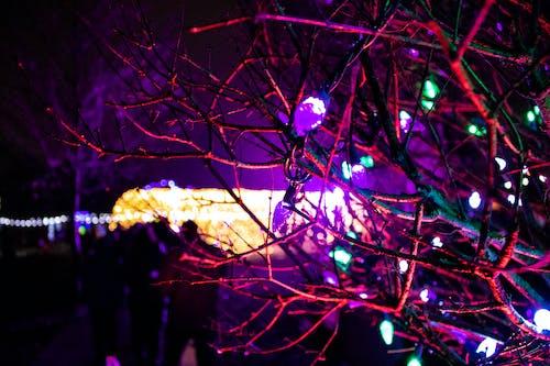 不祥的, 分支機構, 聖誕燈飾, 萬聖節 的 免费素材照片