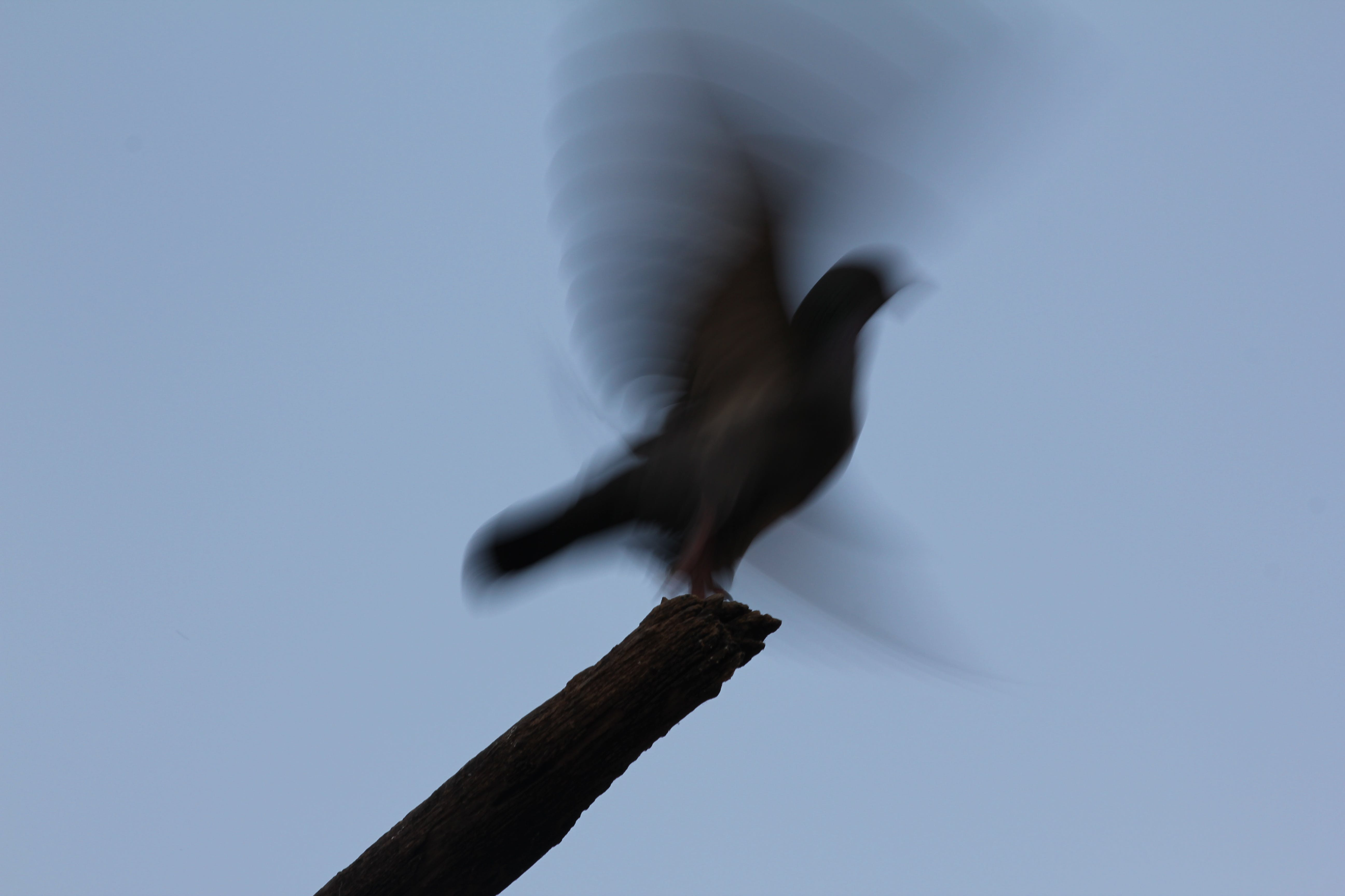 Free stock photo of bird, fader, flying, get ready