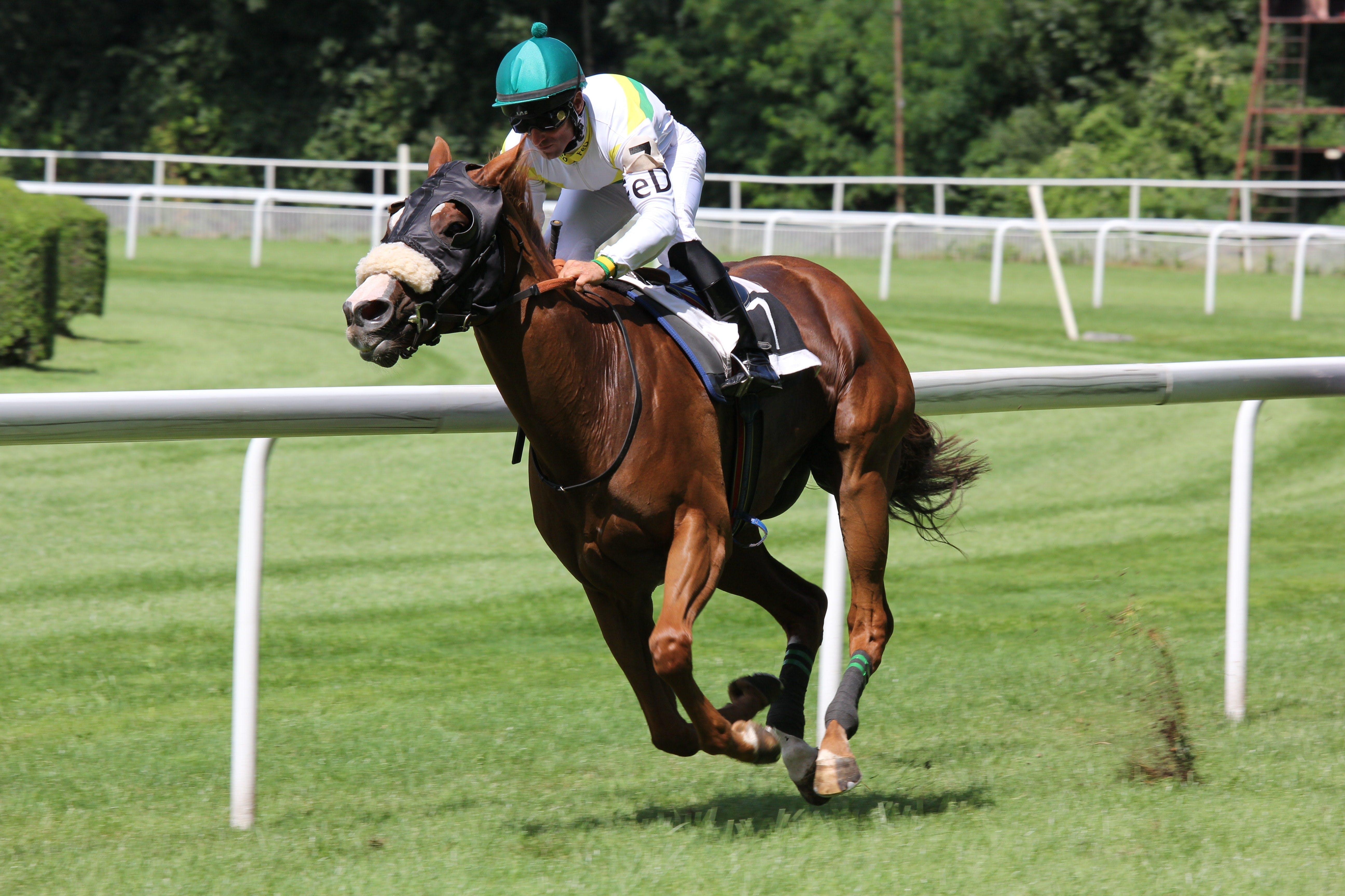 A jockey riding a racehorse
