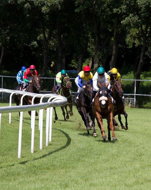 スポーツ, スロバキア, モーション, 競馬の無料の写真素材