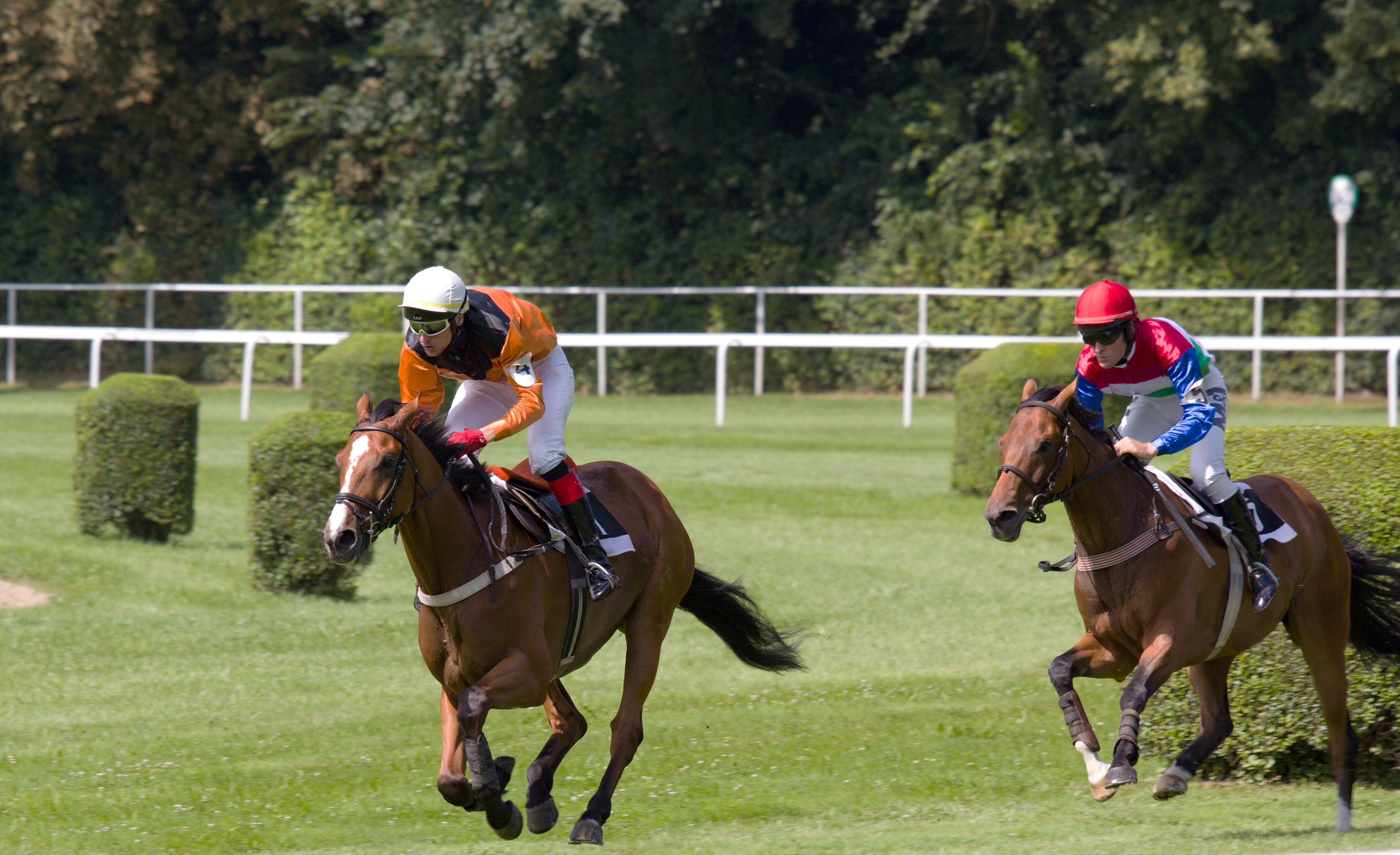 Gratis lagerfoto af bevægelse, hest, hesterace, hesterytter