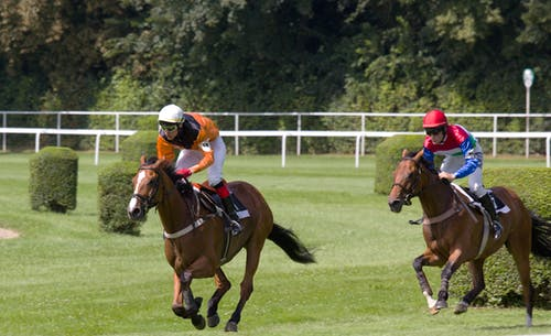 คลังภาพถ่ายฟรี ของ การเคลื่อนไหว, กีฬา, ม้า, สโลวาเกีย