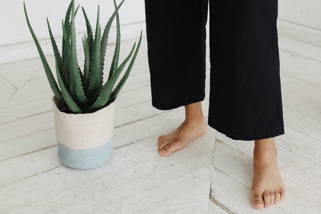 Person Standing Beside Aloe Vera Plant