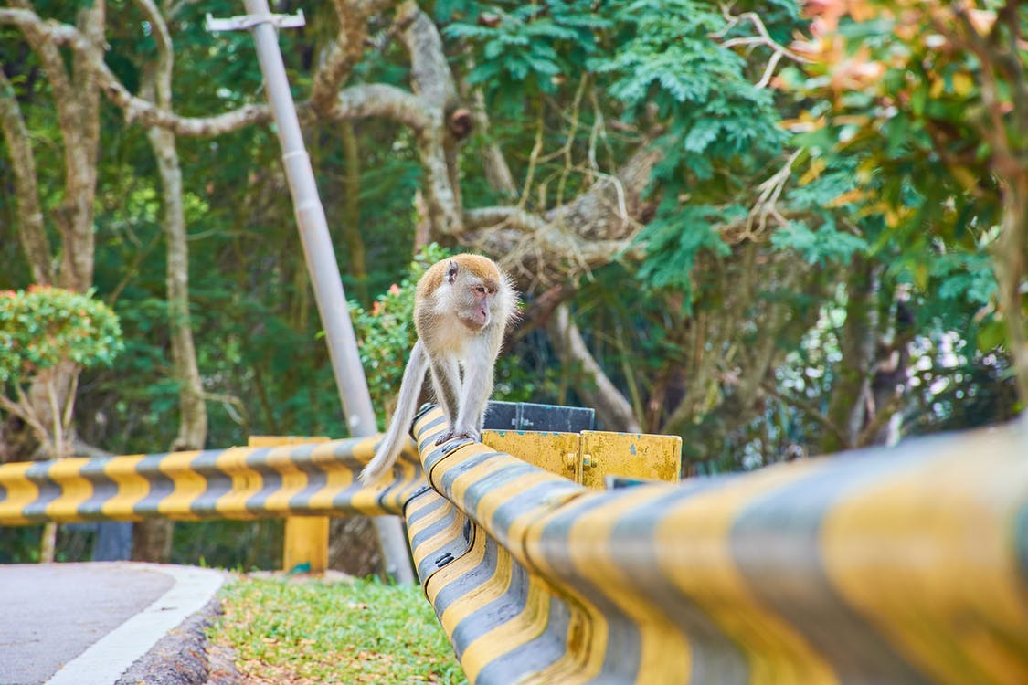 monkey - Kuala Lumpur Itinerary