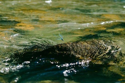 Foto profissional grátis de água, corrente, ecológico, estacionado