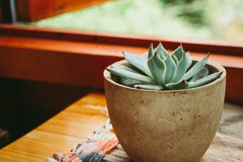 Foto profissional grátis de panela, planta, planta de interior, suculento