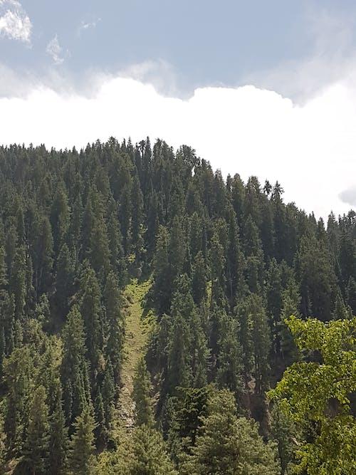 山, 木, 空, 緑の無料の写真素材
