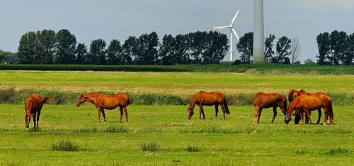 Foto d'estoc gratuïta de animals, arbres, bestiar, camp