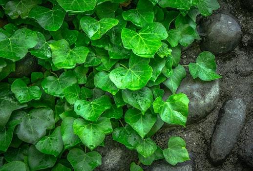 Green Leaf on Ground Besides Black Stones