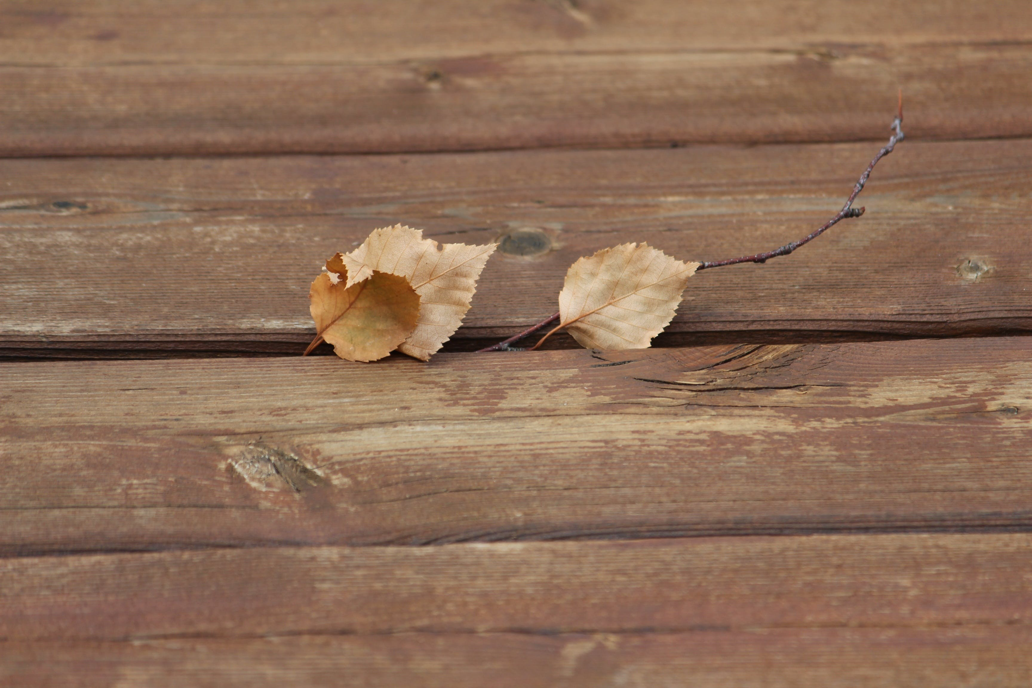 Brown Dry Leaves on Brown Wooden Plank