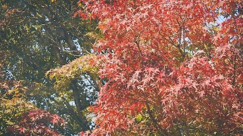 Photos gratuites de arbre, japon