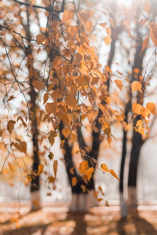 1000 Amazing Blurred Background Photos Pexels Free Stock Photos