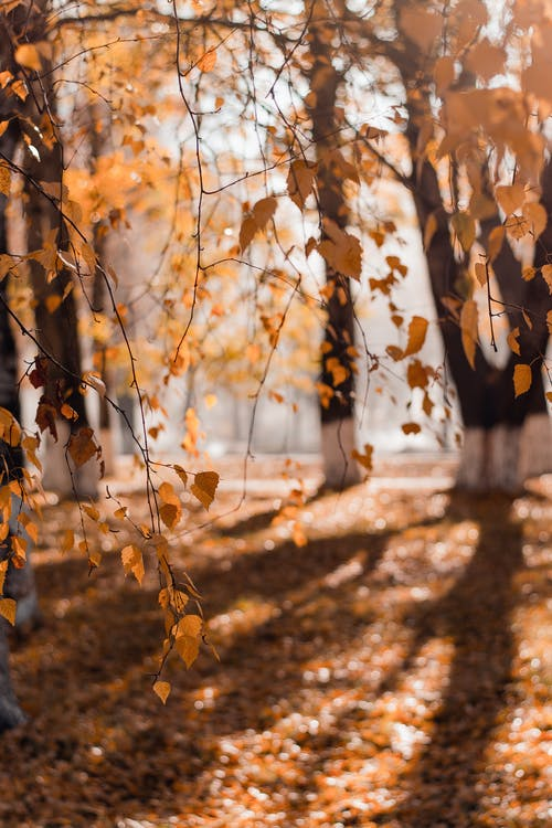 Selective Focus Photography of Brown Leafed Trees