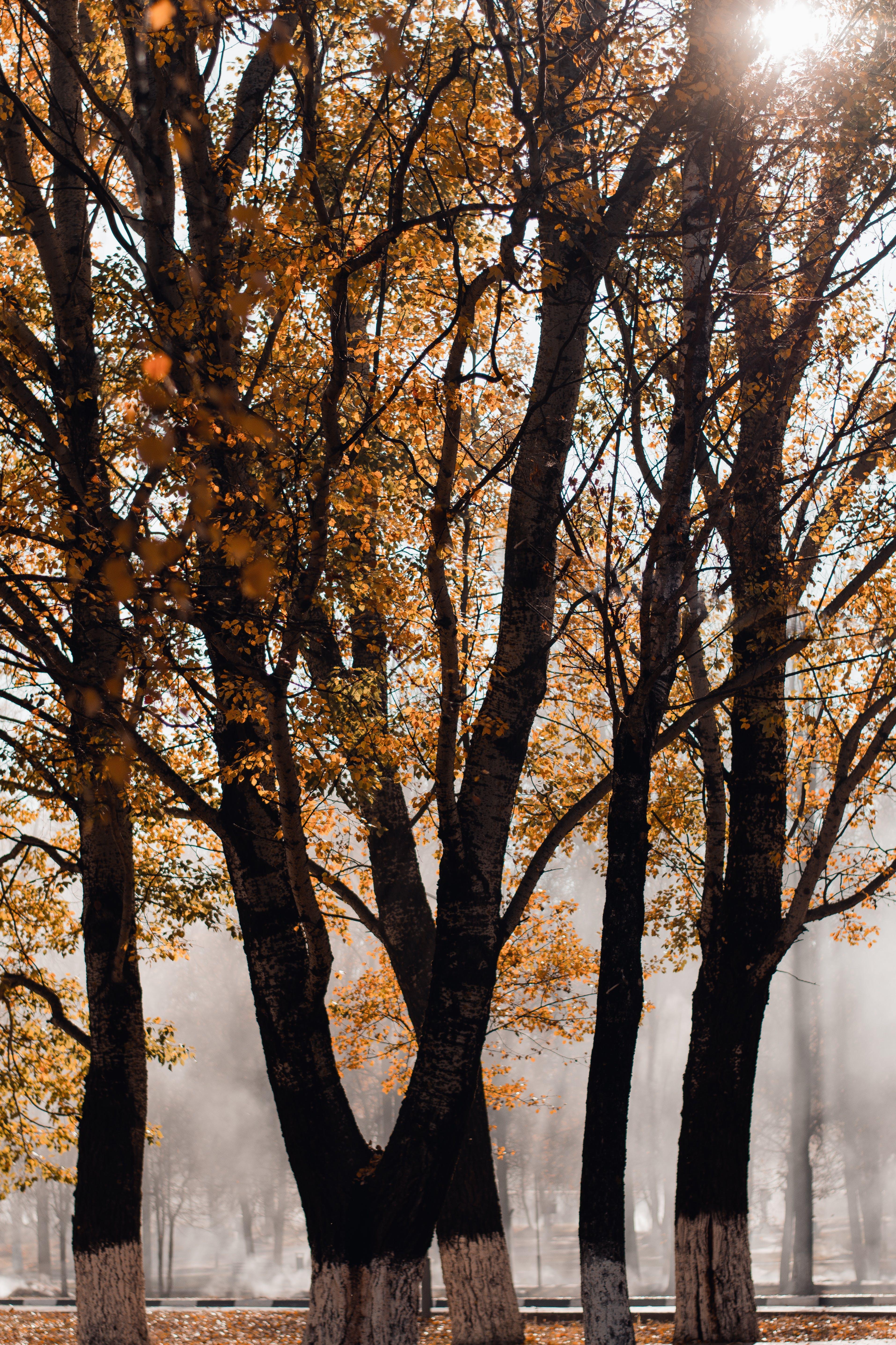 Kostenloses Stock Foto zu kalt, landschaft, natur, sonnenuntergang