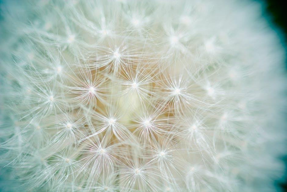 New free stock photo of plant, flower, dandelion