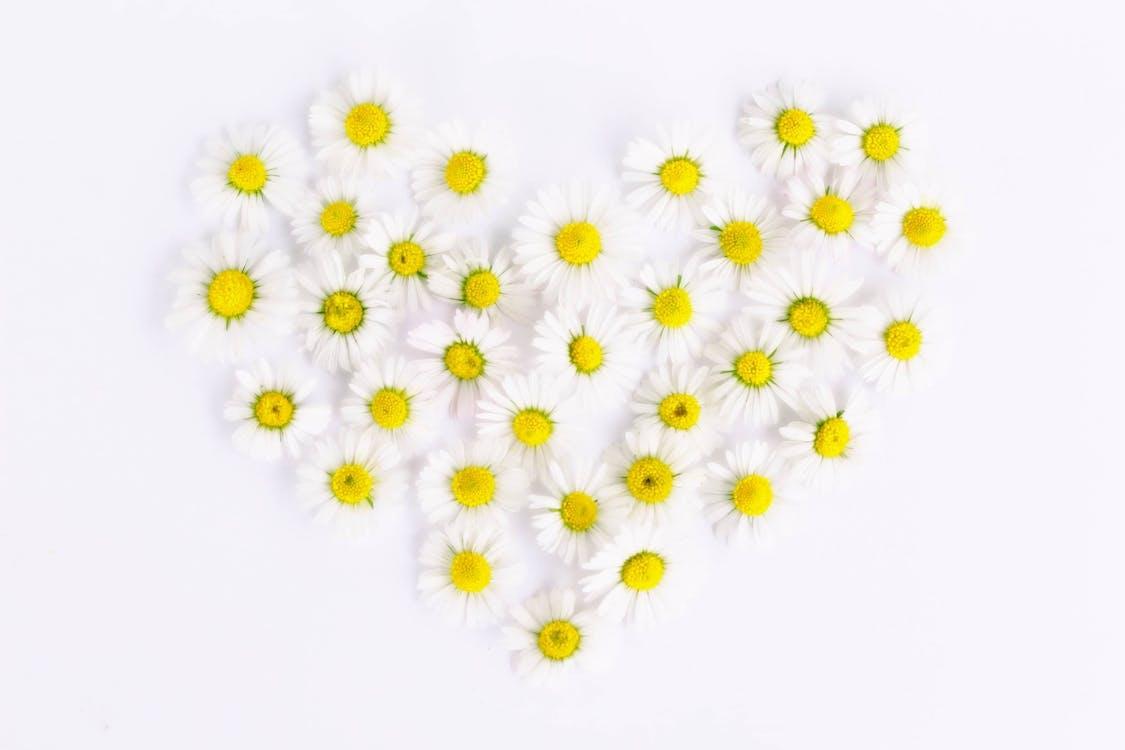 Weiße Und Gelbe Blumen In Herzform