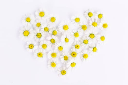 free stock photos of hearts 183 pexels