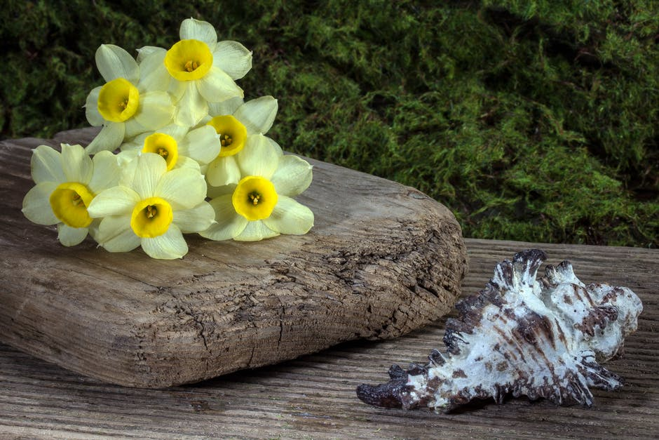 New free stock photo of wood, flowers, summer