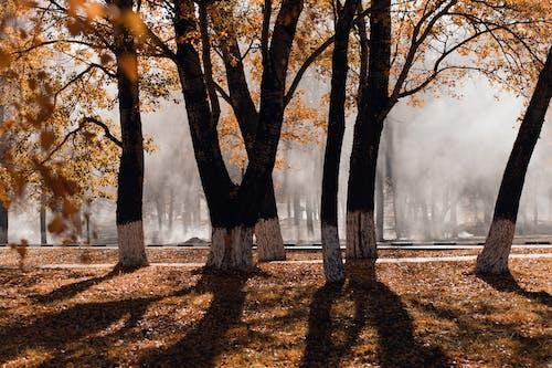 Ilmainen kuvapankkikuva tunnisteilla idyllinen, kuivat lehdet, lehdet, luonto