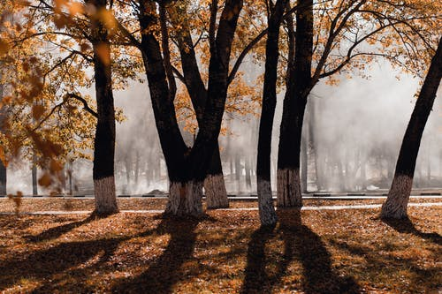 Fotobanka sbezplatnými fotkami na tému hmla, idylický, kmene stromov, krajina