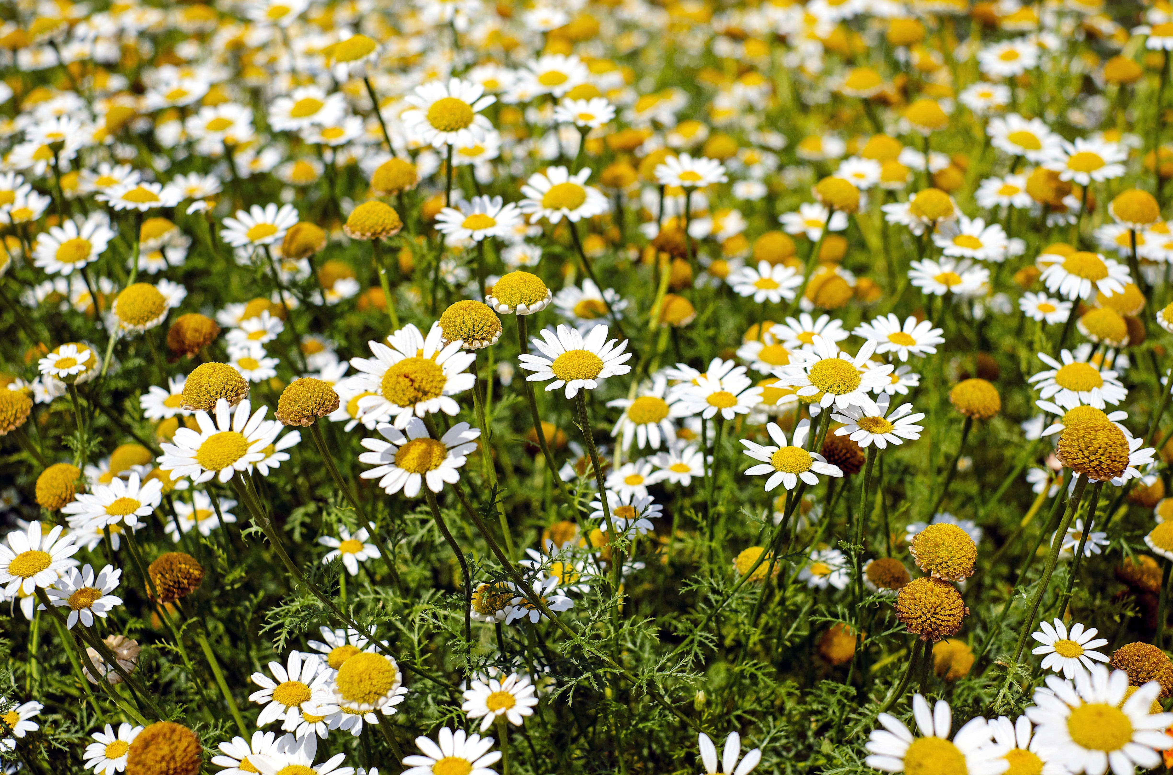Shallow Focus Photography of Yellow and White Flowers during Daytime