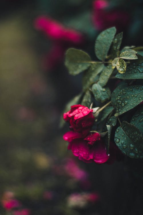 Fotobanka sbezplatnými fotkami na tému detailný záber, farba, flóra, hĺbka ostrosti
