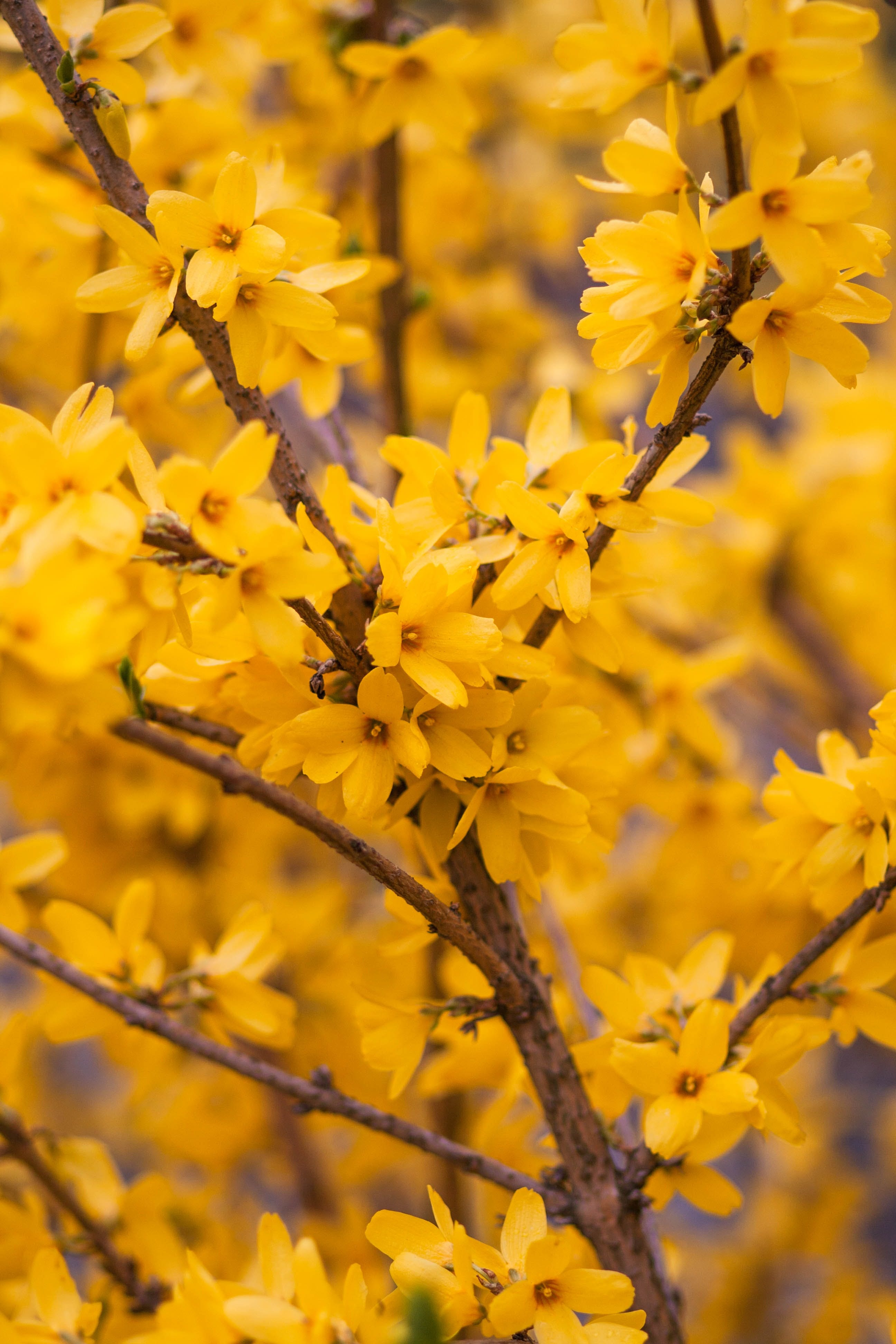 Immagine gratuita di albero, bellissimo, colore, estate