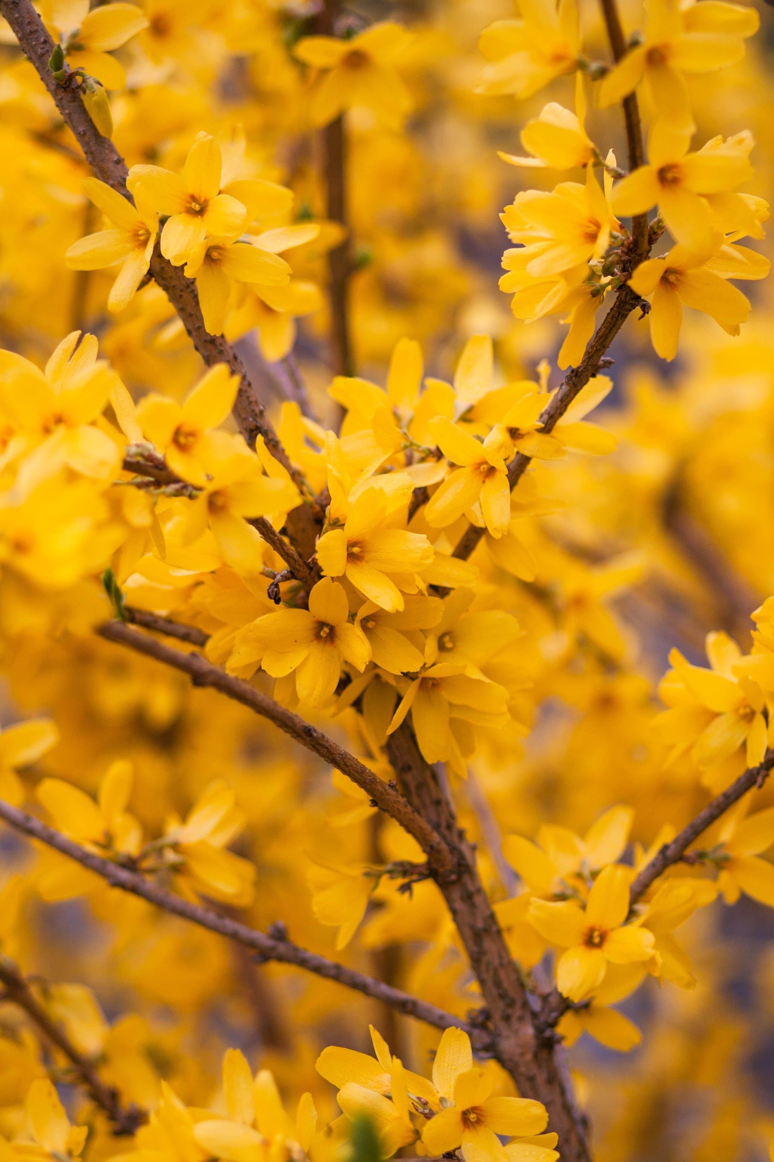 Macro Photography of Yellow Flowering Tree
