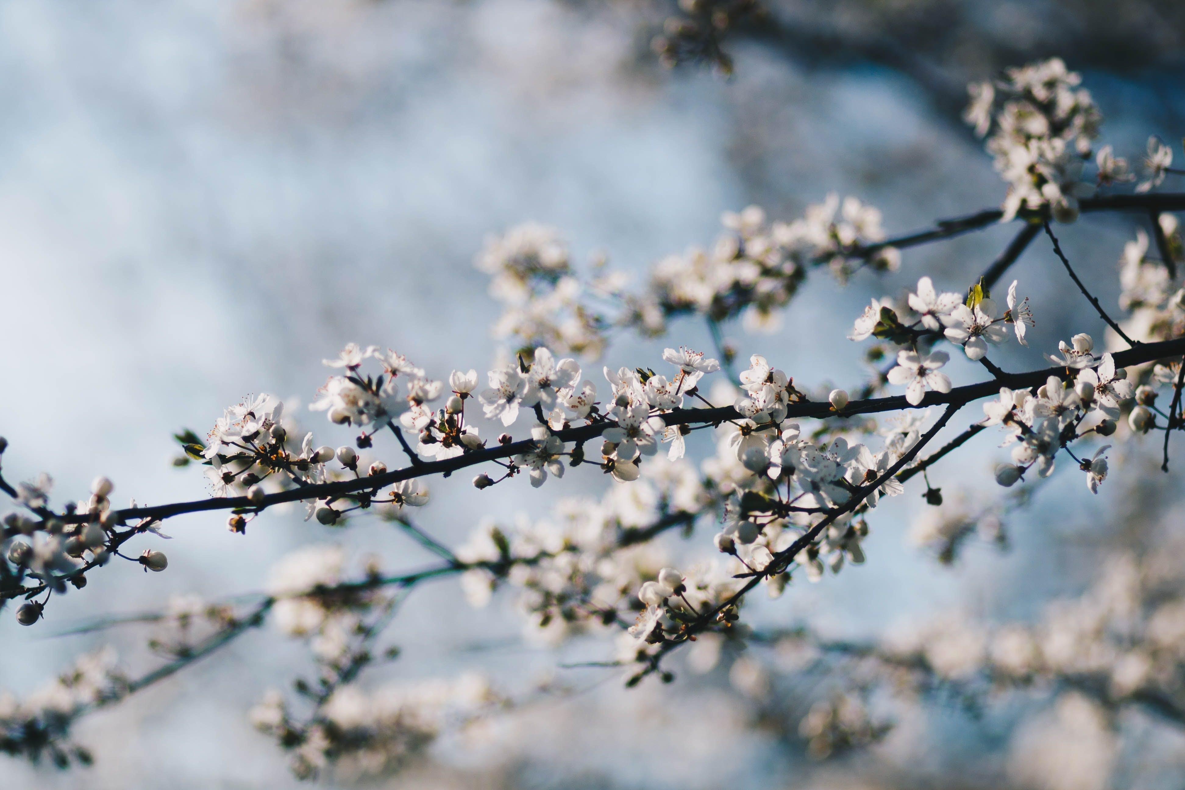 Immagine gratuita di bellissimo, concentrarsi, crescita, delicato