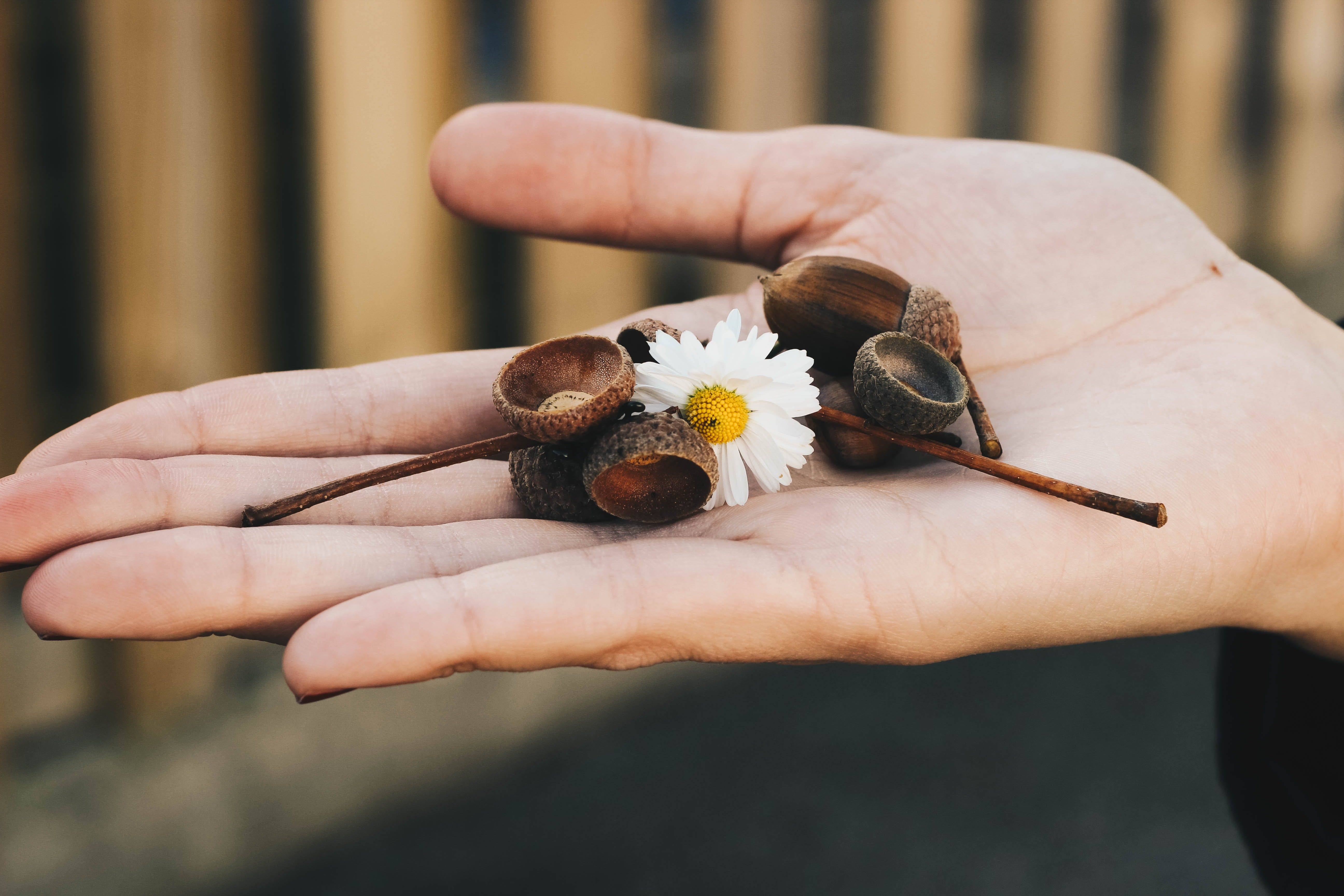 Person Holding White Daisy Flower and Brown Accessories