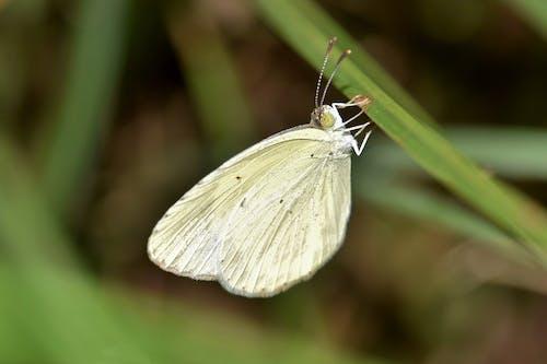 小蟲, 昆蟲, 景深, 草 的 免費圖庫相片