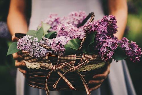 Darmowe zdjęcie z galerii z bukiet, delikatny, flora, kwiat