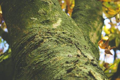 Foto d'estoc gratuïta de arbre, escorça, molsa, primer pla