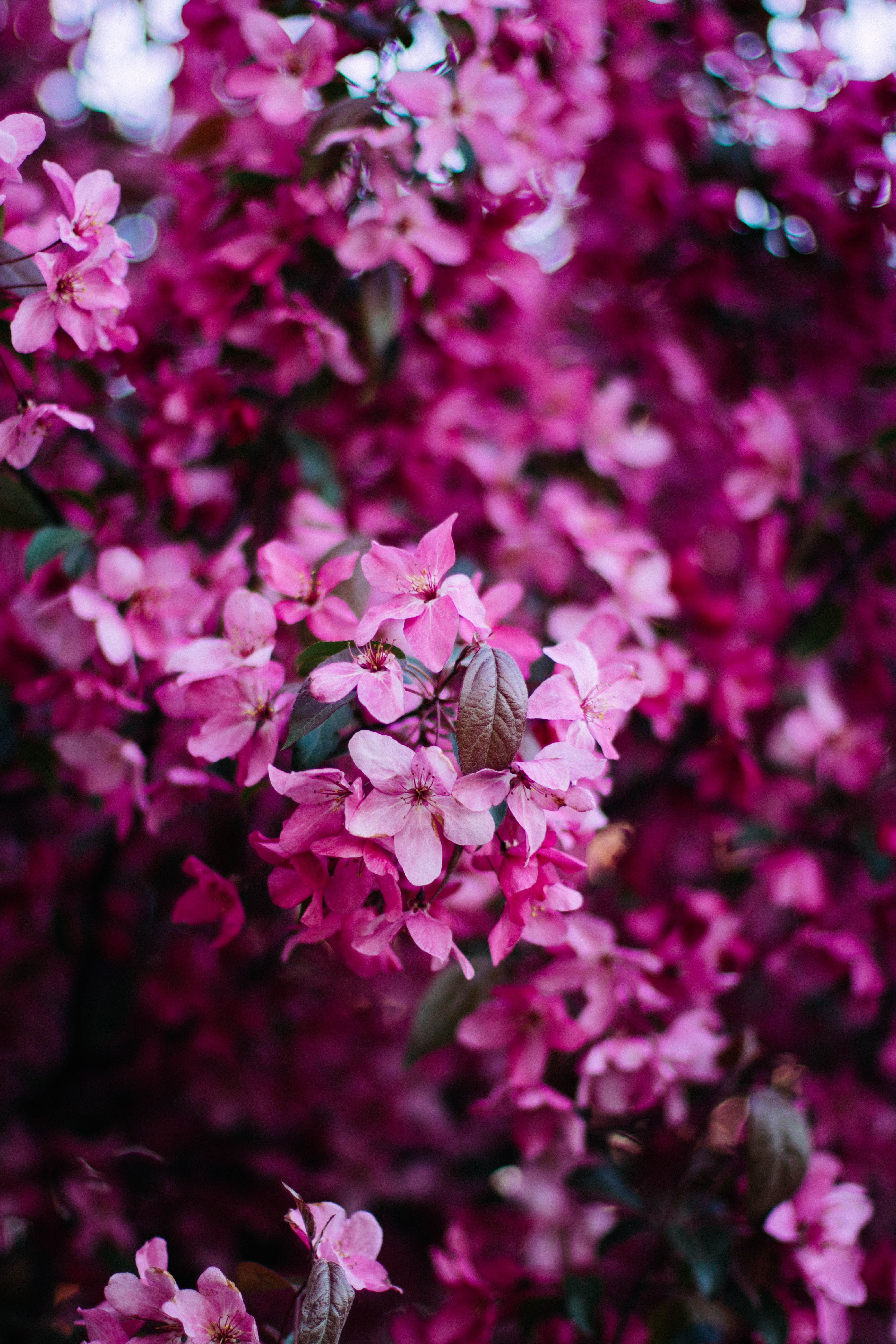 Selective Photo Pink Flowers