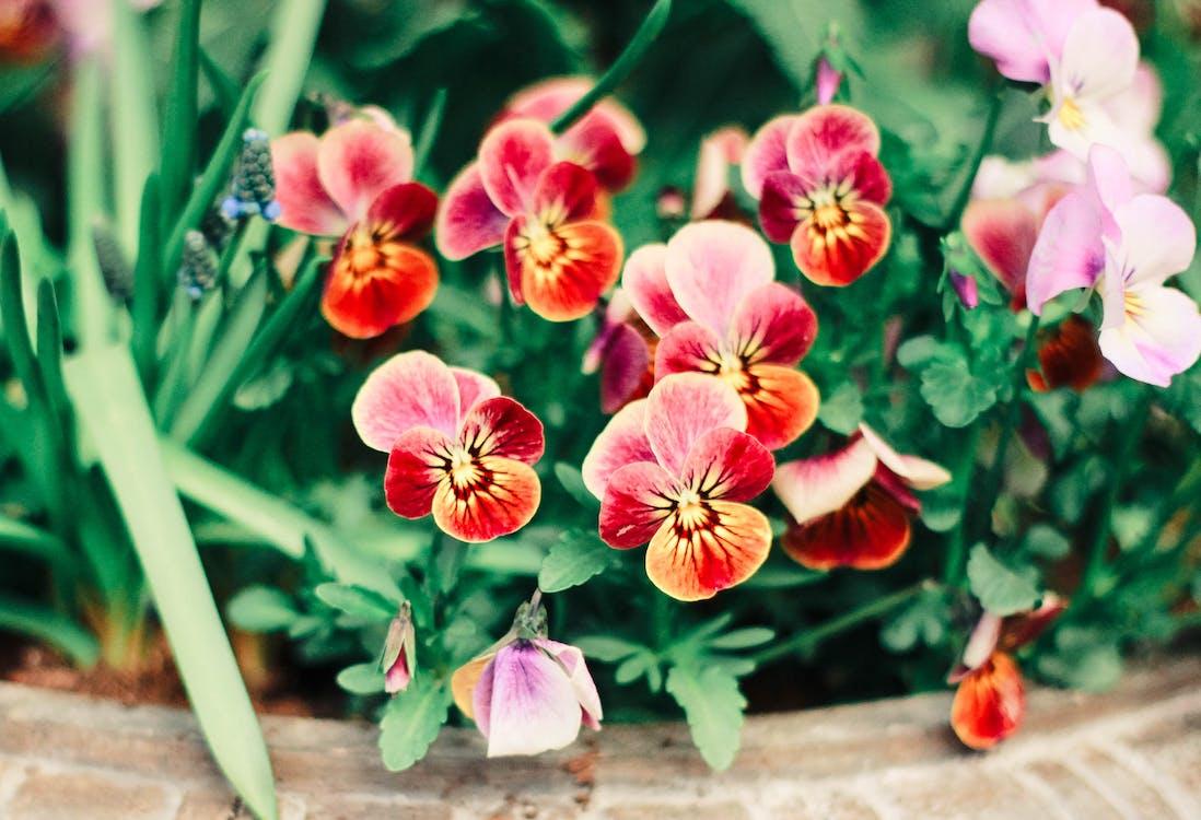 barevný, flóra, hřiště