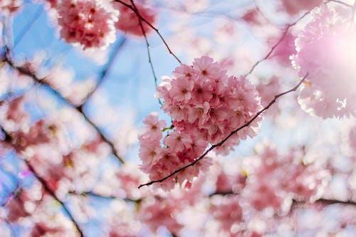Kostnadsfri bild av blomma, blommor, blomning, dagsljus
