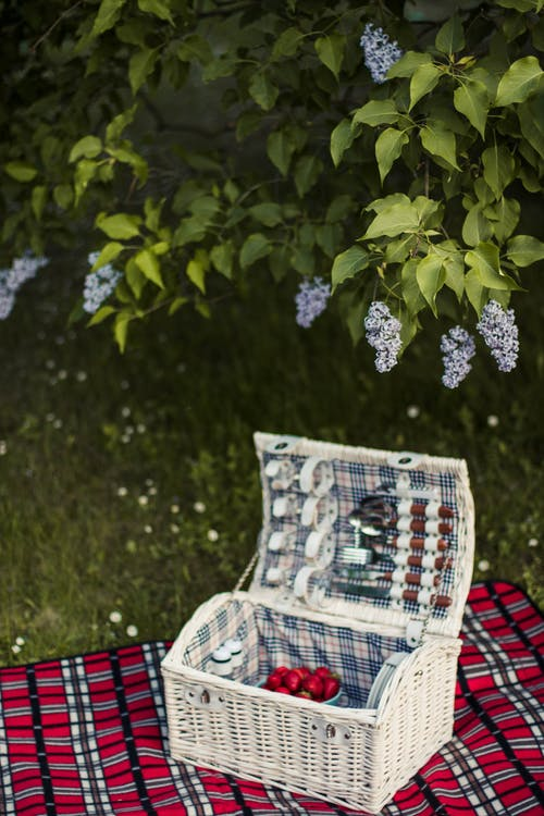 公園, 刀具, 原本, 墊 的 免费素材照片