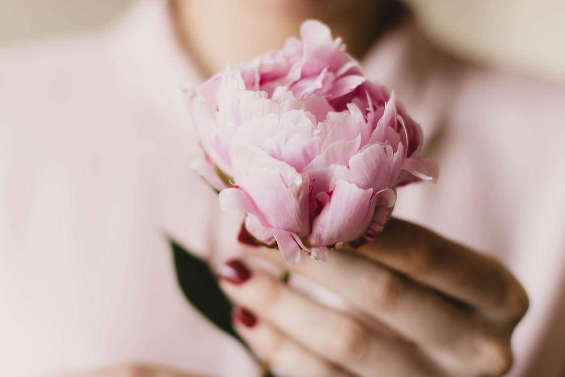 Close-Up Photo of Person Holding Pink Flower
