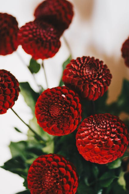Bunch of red petaled flowers