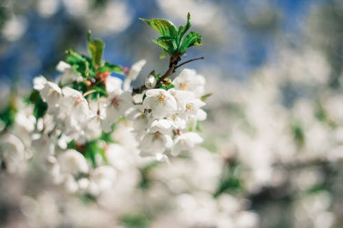 Immagine gratuita di albero, bocciolo, crescita, fiore