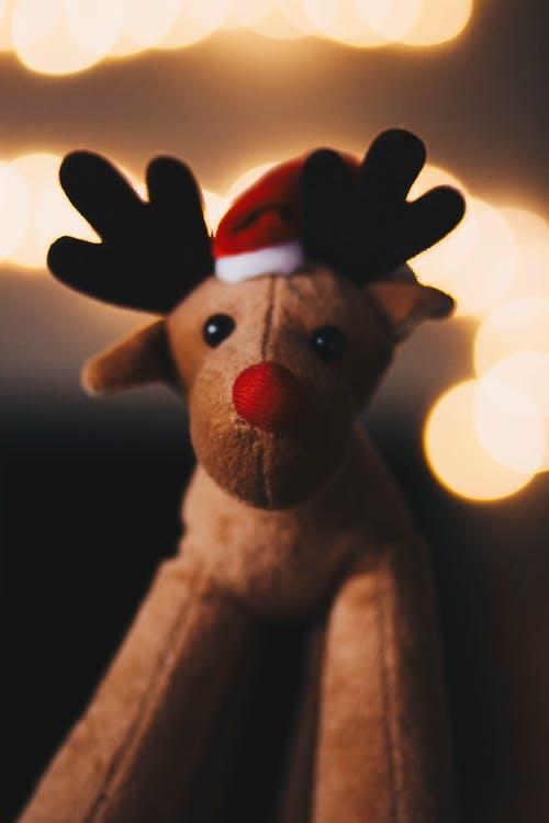 doldurulmuş hayvan, doldurulmuş oyuncak, Noel, oyuncak içeren Ücretsiz stok fotoğraf
