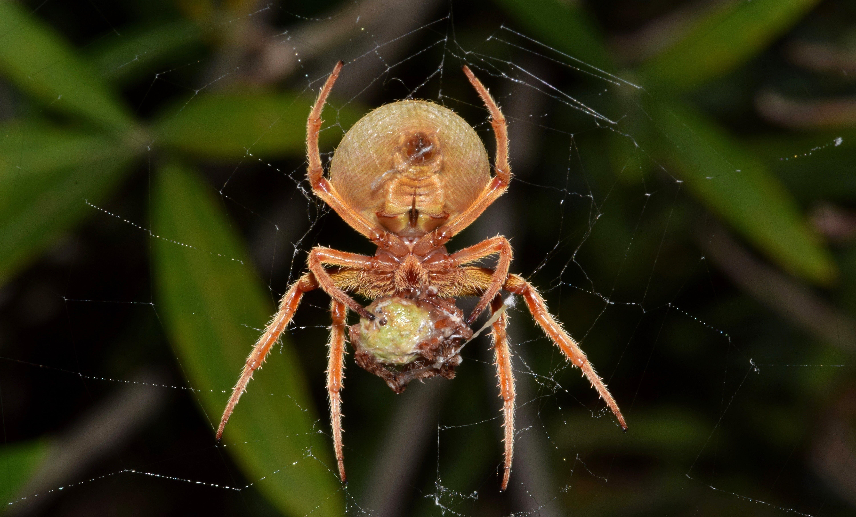 거미, 거미류, 거미줄, 동물의 무료 스톡 사진
