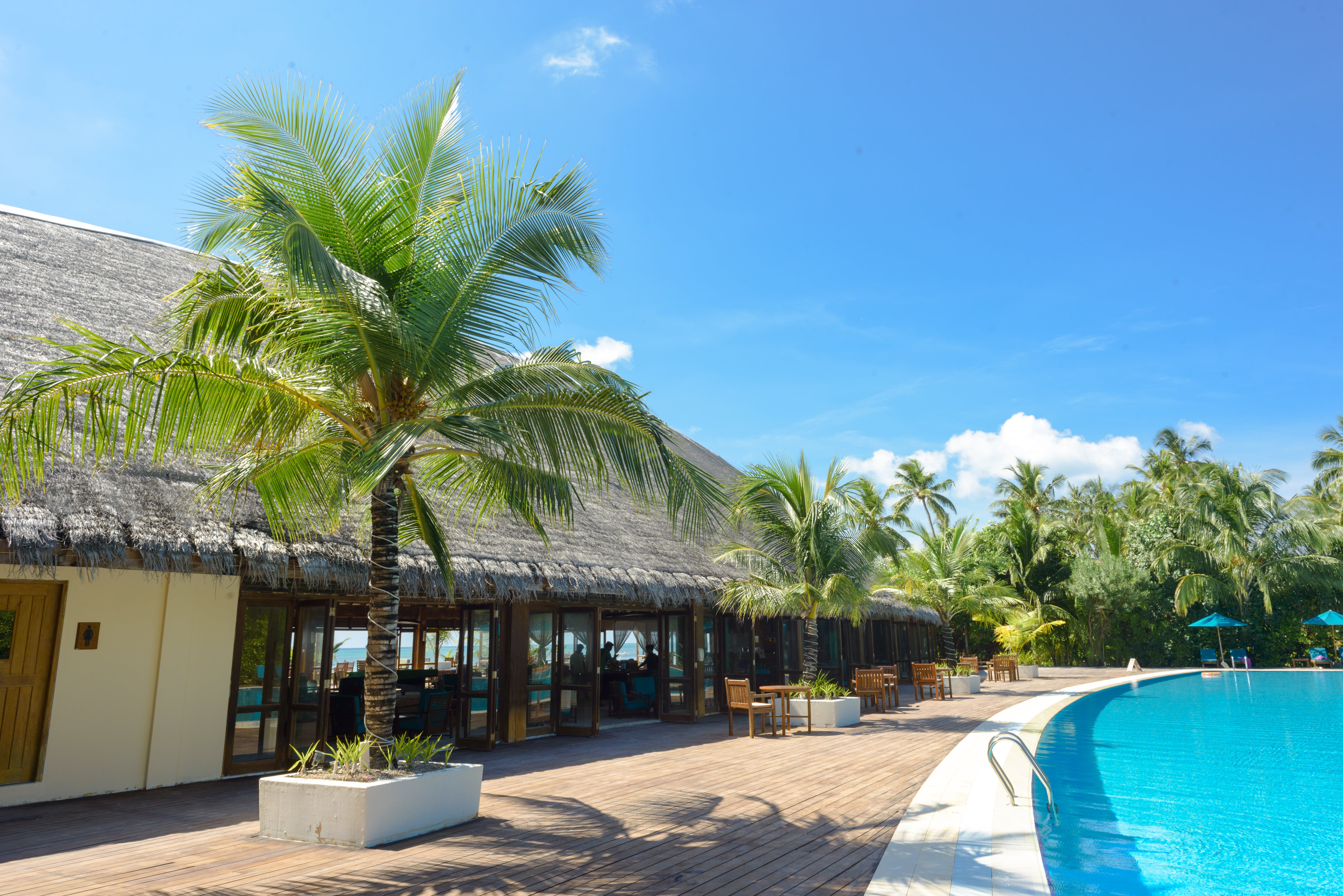 Swimming Pool Surrounded by Coconut Palms