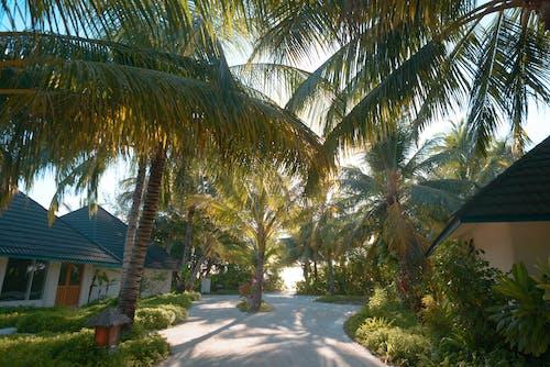 Základová fotografie zdarma na téma denní světlo, kokosové palmy, letovisko, obloha