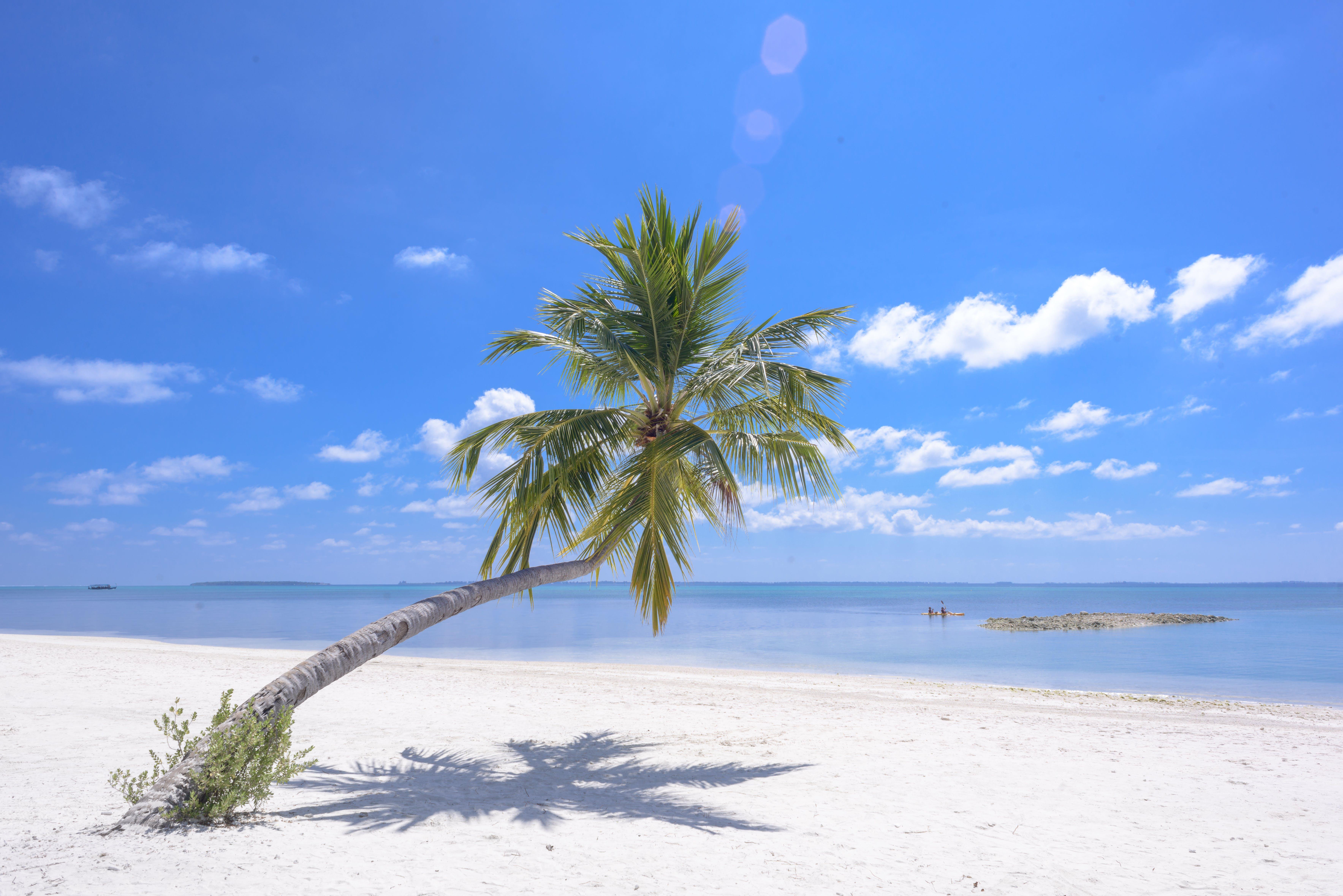 Photo of Coconut Tree On Seashore