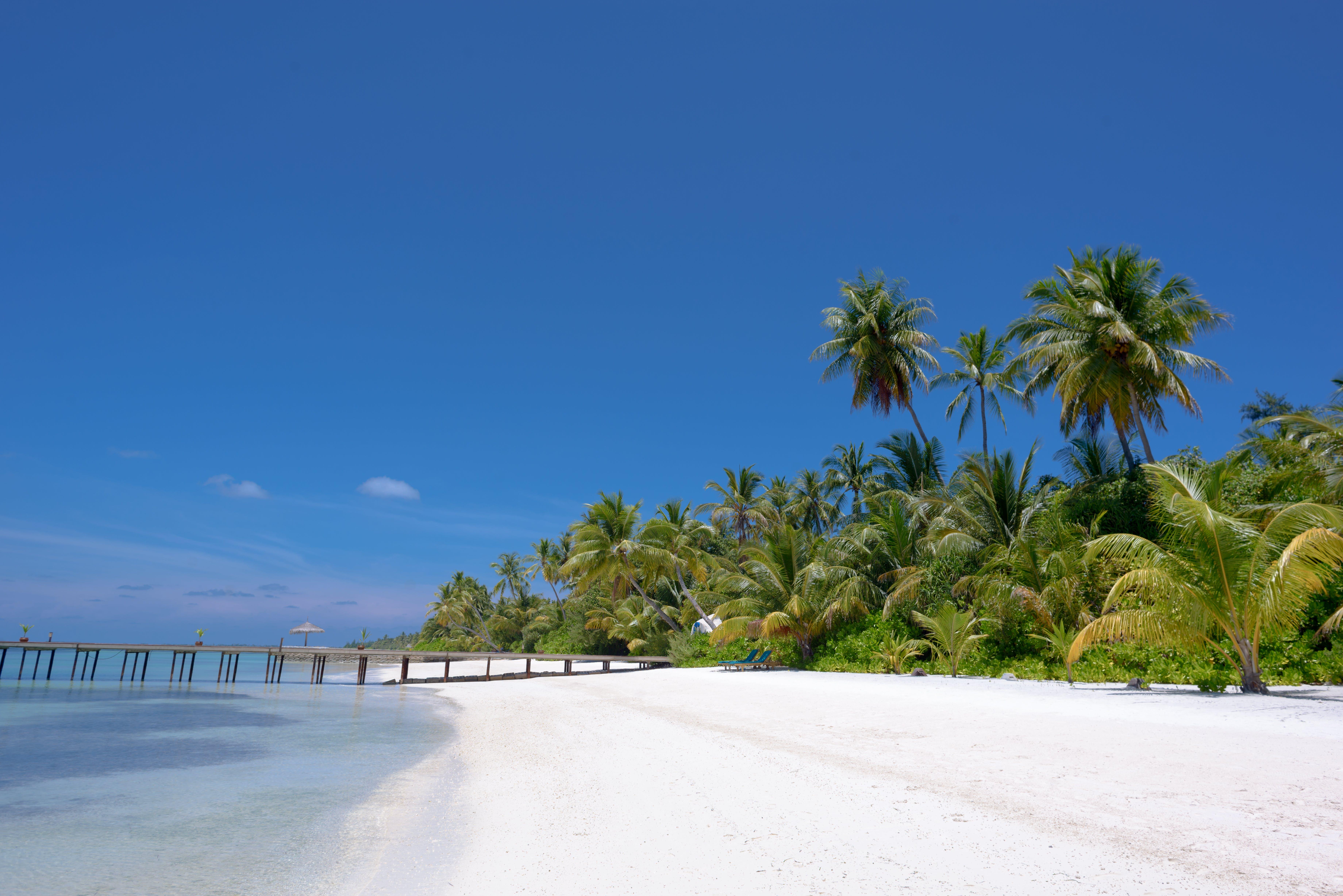 Brown Dock Near Coconut Trees