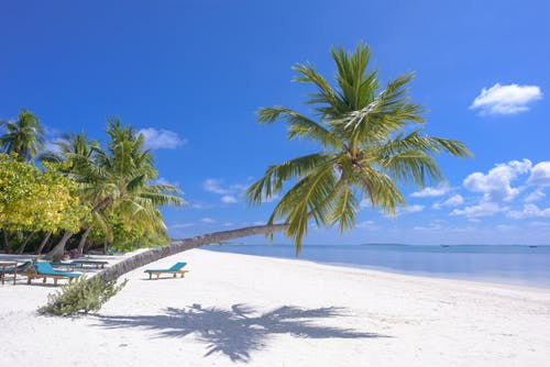 Photo of Coconut Trees On Seashore